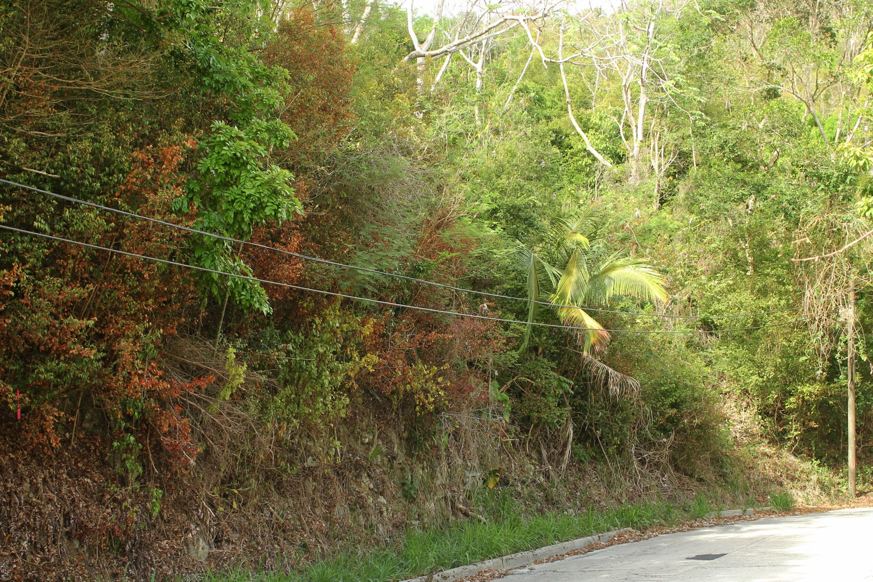 Additional photo for property listing at Mount Sage Land Lot 3 Sage Mountain, Tortola Ingiliz Virgin Adalari