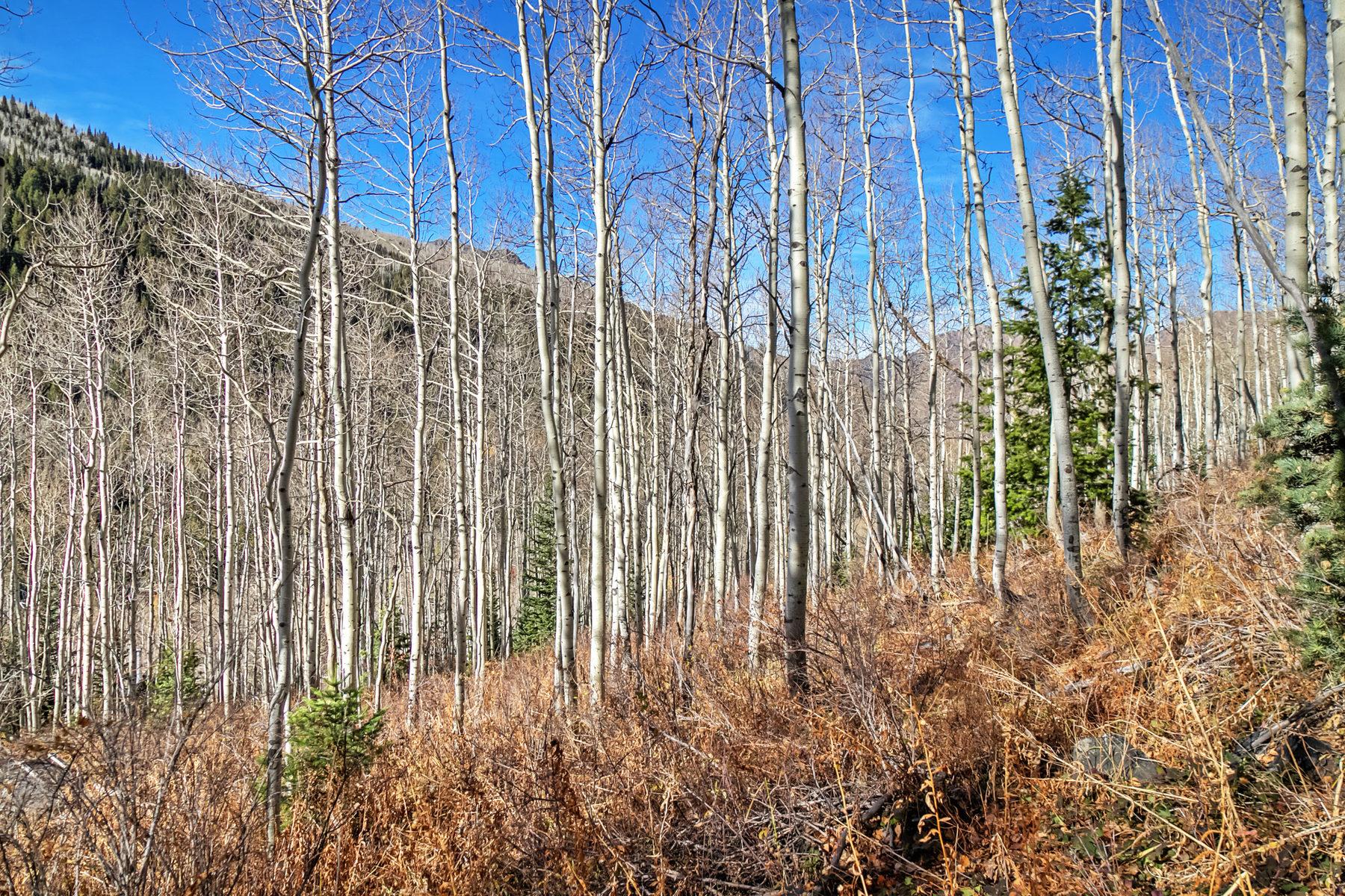 Terreno para Venda às Absolute mountain perfection 11267 E Mule Hollow Ln Brighton, Utah, 84121 Estados Unidos