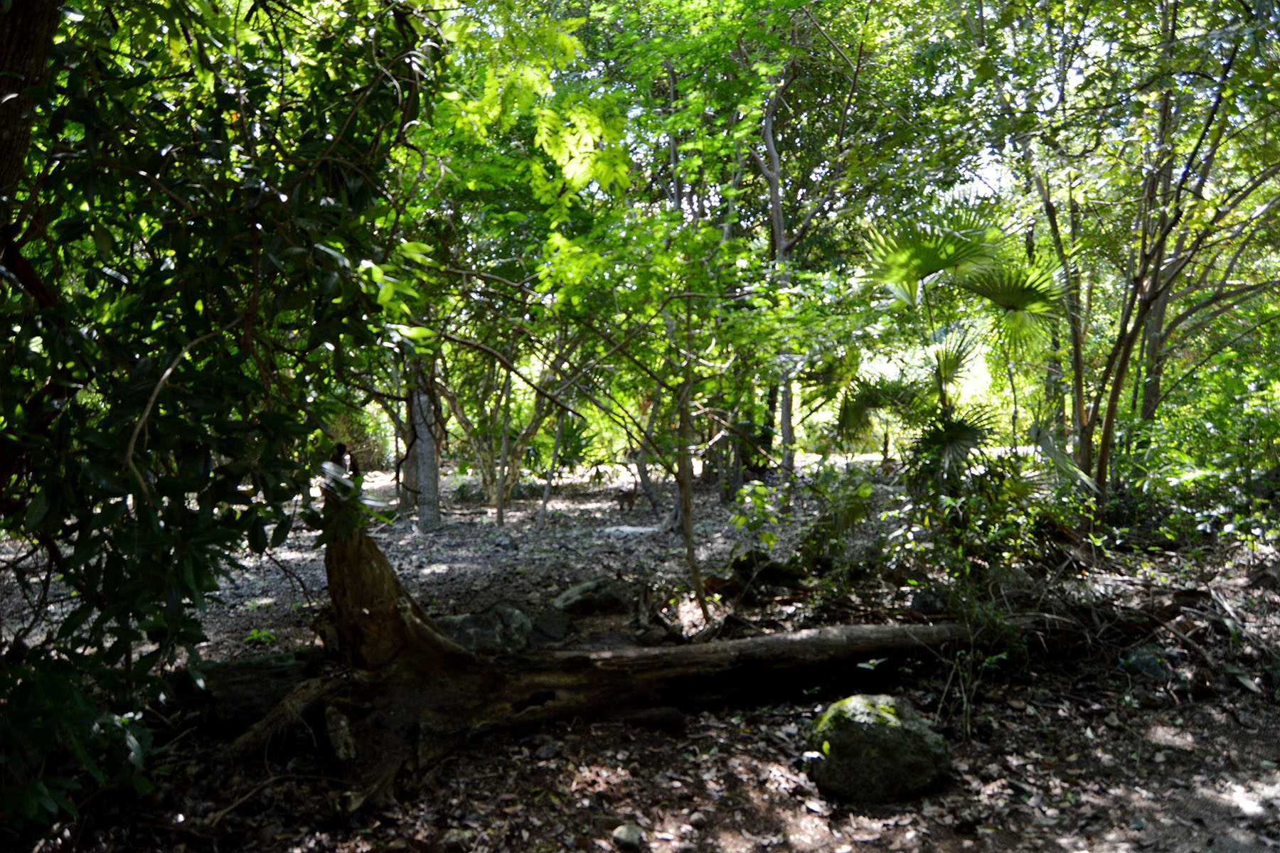 Additional photo for property listing at 181 CLUB REAL RESIDENTIAL LOT 181 Club Real Residential Lot Retorno Copan Playa Del Carmen, Quintana Roo 77710 Mexico