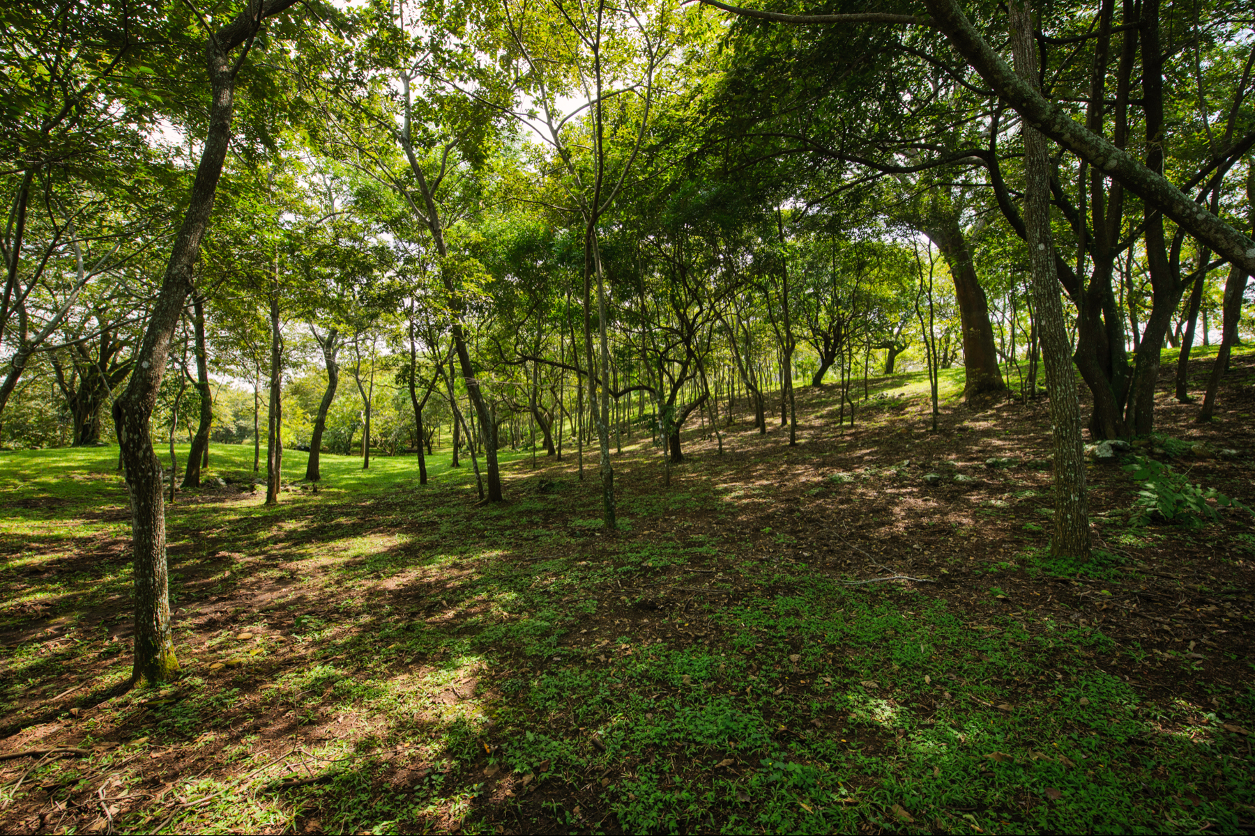 Additional photo for property listing at Finca Hermosa  Atenas, Alajuela 20501 Costa Rica
