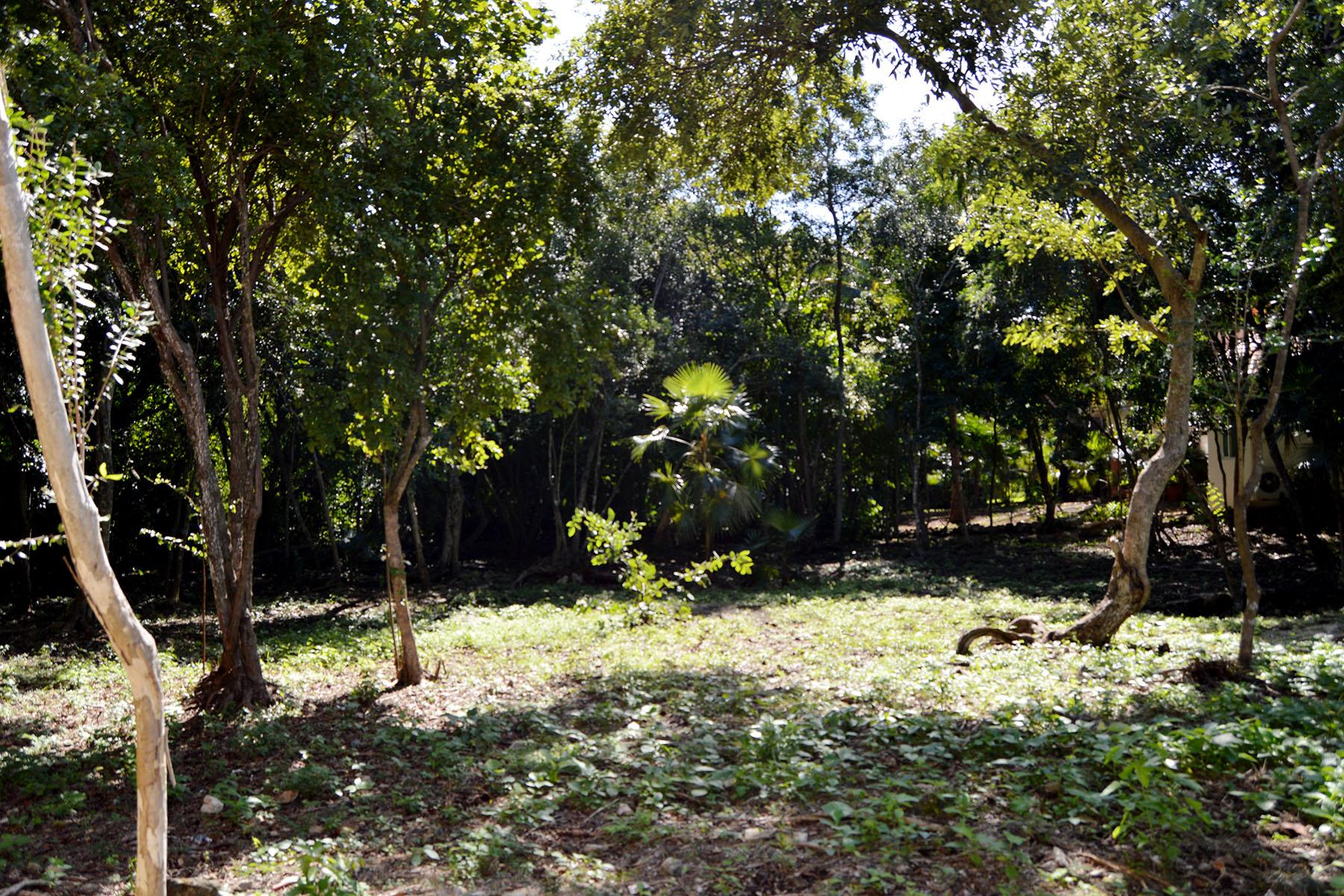 Terrain pour l Vente à 107 CLUB REAL RESIDENTIAL LOT 107 Club Real Residential Lot Retorno Copan Playa Del Carmen, Quintana Roo, 77710 Mexique