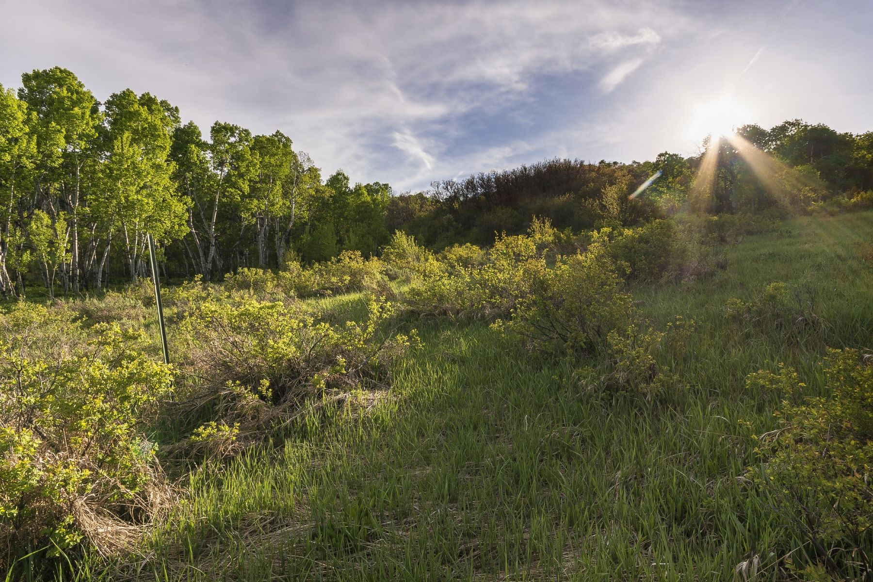 Additional photo for property listing at 35+ Acres with Stunning Mountain Views 28200 Grouse Creek Park Road Steamboat Springs, Colorado 80487 United States