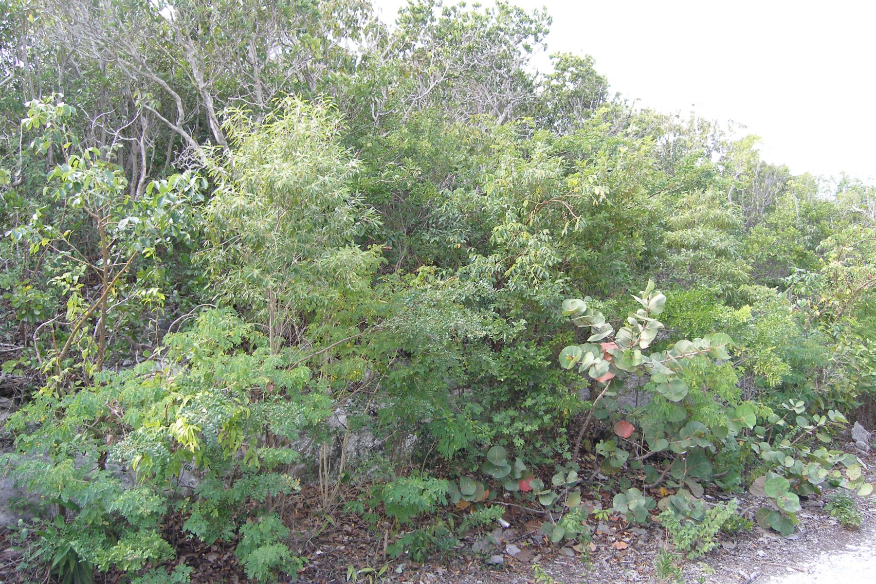 Additional photo for property listing at Eleuthera Island Shores Eleuthera Island Shores, Gregory Town, Eleuthera Bahamas