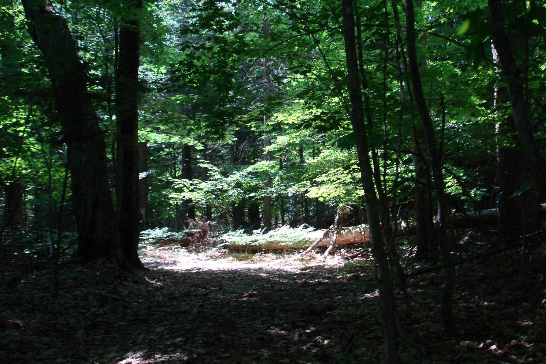 Additional photo for property listing at Carlisle Drive Carlisle Drive Beaver Island, Michigan 49782 United States