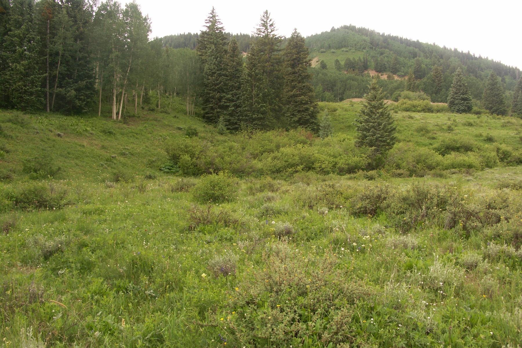 أراضي للـ Sale في Spectacular Horse Property TBD Hidden Mine Road Lot 10, Crested Butte, Colorado, 81224 United States