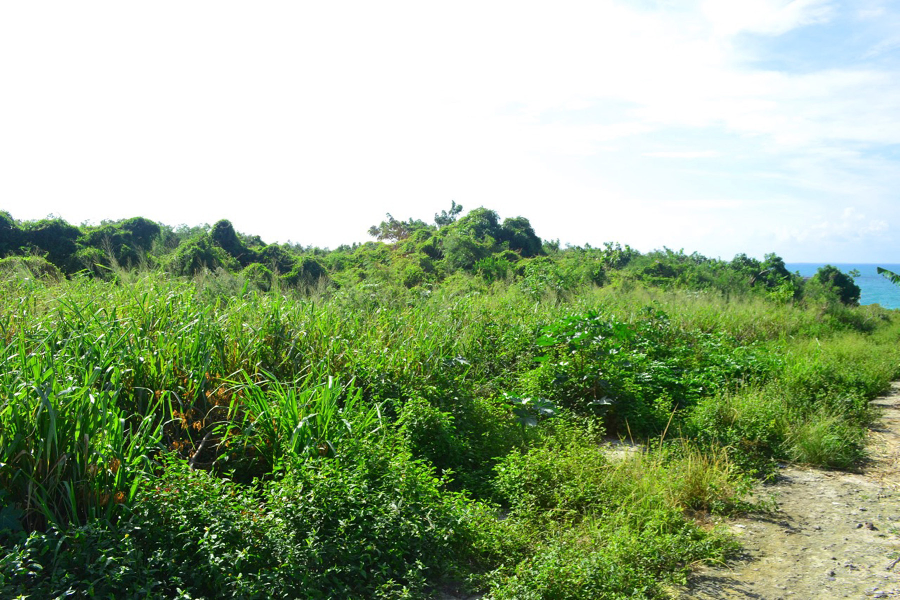Additional photo for property listing at Russell Island South Vacant Lots Spanish Wells, Eleuthera Bahamas