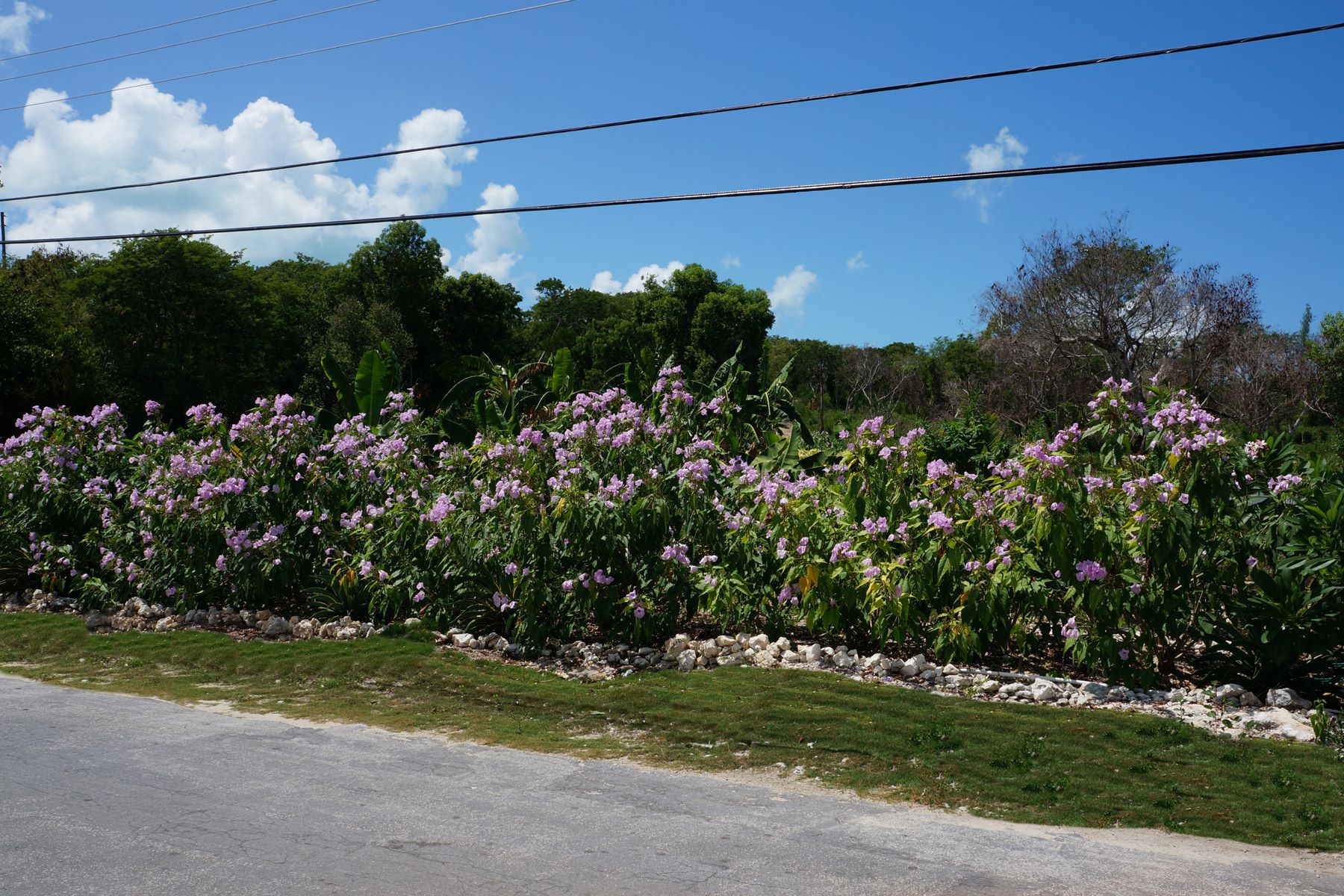 Additional photo for property listing at Russell Island Acreage with Dock Russell Island, Spanish Wells, Eleuthera Bahamas