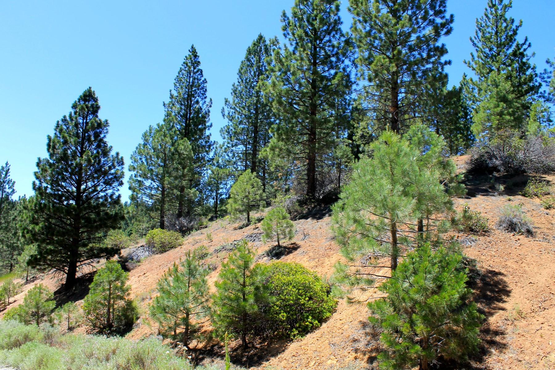 Additional photo for property listing at 212 Cedar Ravine Road  波托拉, 加利福尼亚州 96122 美国