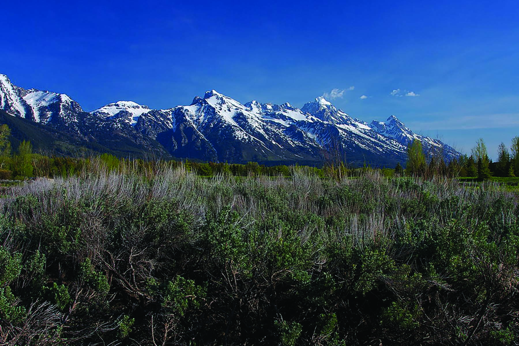 sales property at Premier Site at the Base of Tetons