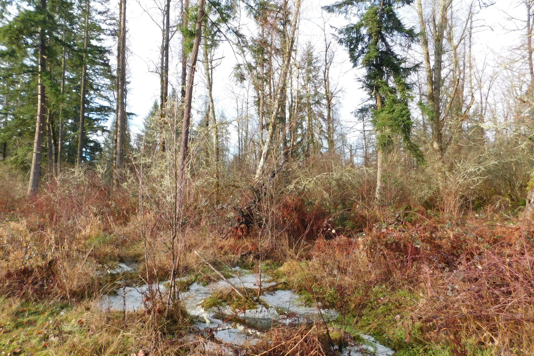 Additional photo for property listing at 380 acre ranch Undisclosed Spanaway, Washington 98580 United States