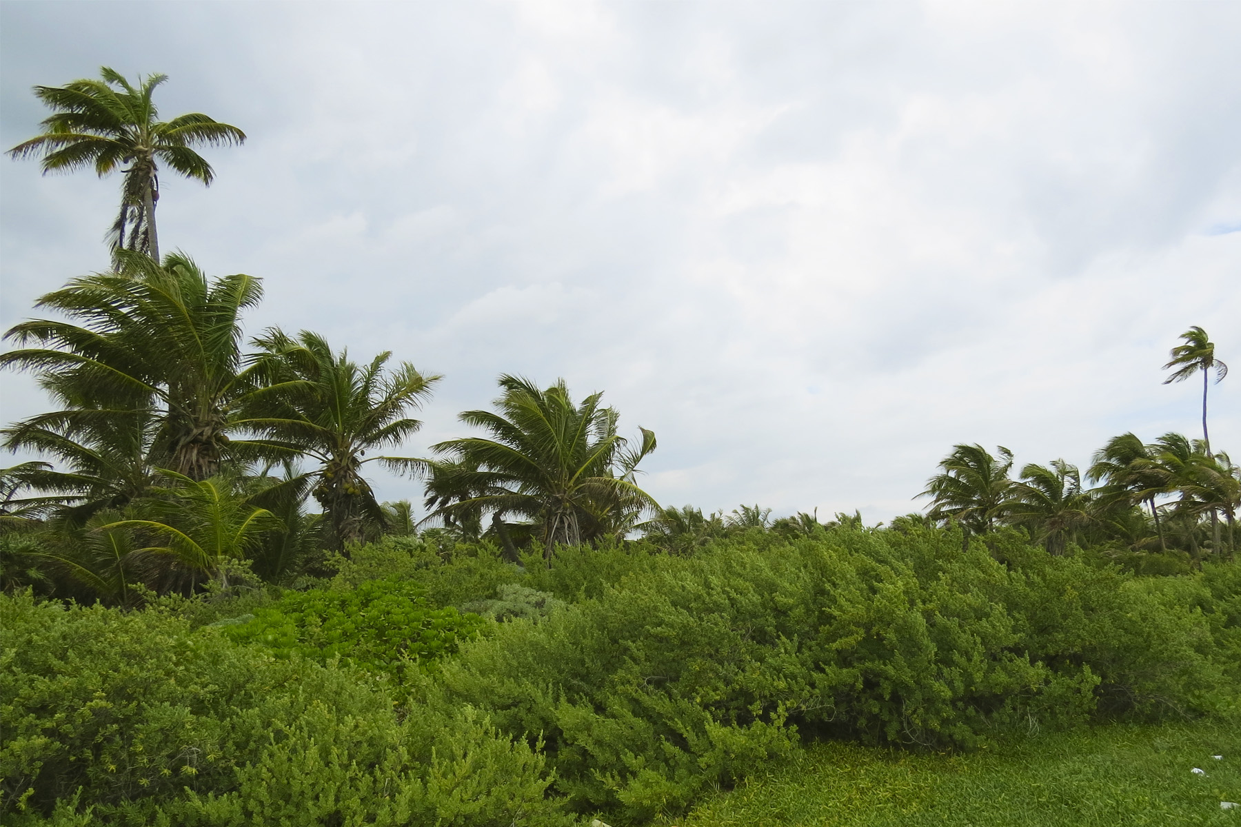 Additional photo for property listing at 1,805 FEET BEACHFRONT LOT IN SIAN KA'AN RESERVE Fracc. 2 Camino a Mahahual - Punta Herrero Tulum, Quintana Roo 77925 Mexico