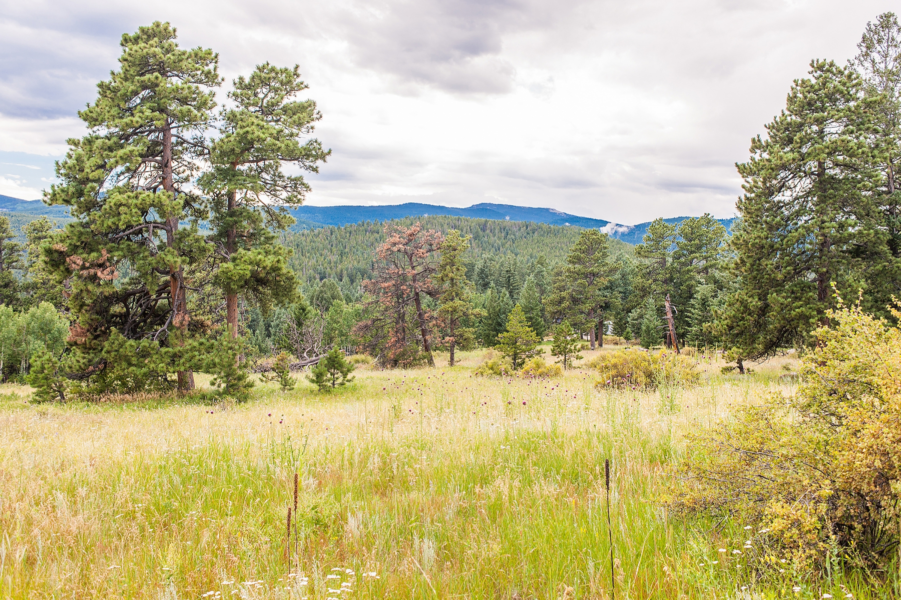 Additional photo for property listing at Double N Ranch 33391 Buffalo Park Road Evergreen, Colorado 80439 United States