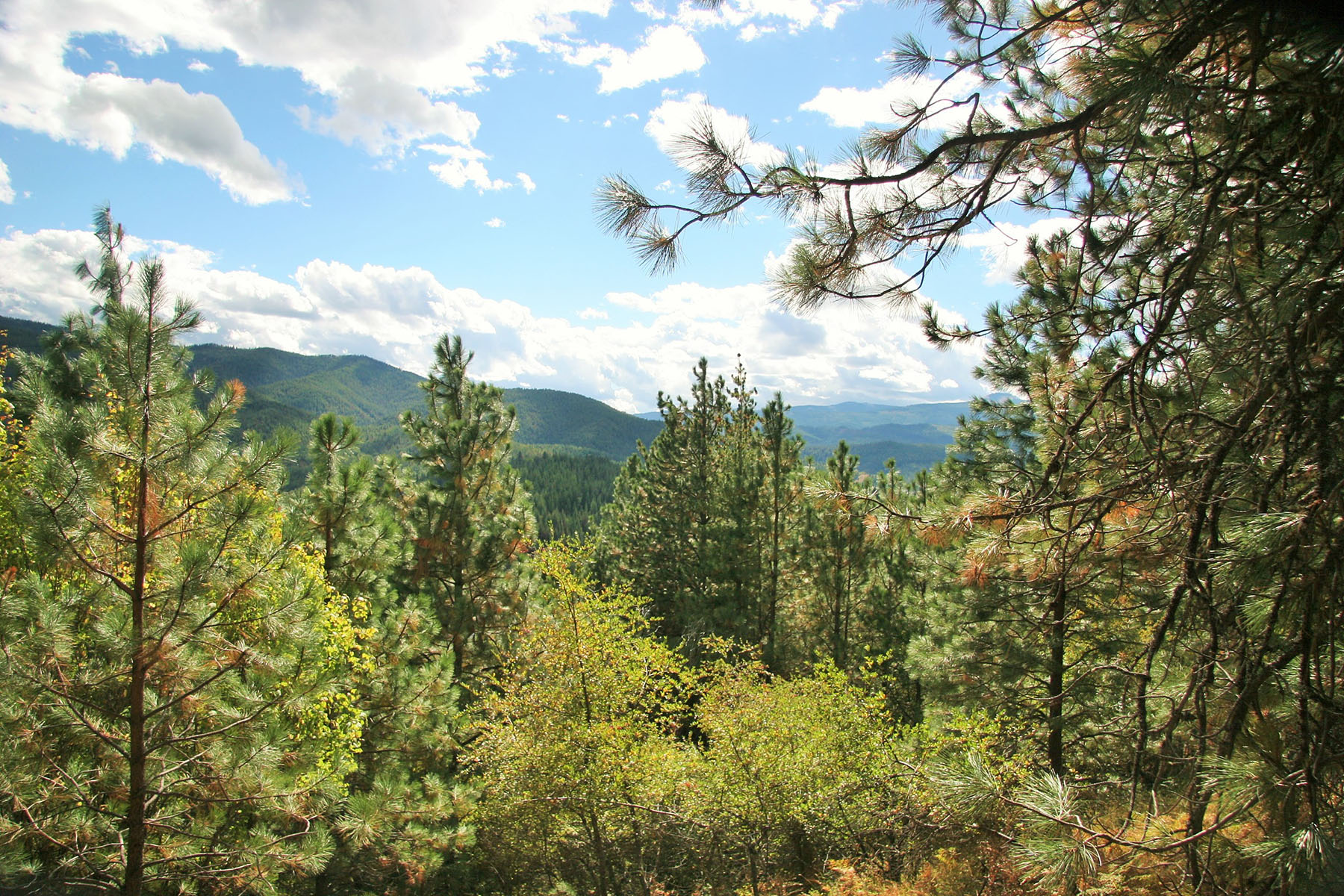 Terrain pour l Vente à 40 acres with amazing views overlooking the Silver Valley NNA South Fork Ridge 40-2 Smelterville, Idaho, 83868 États-Unis