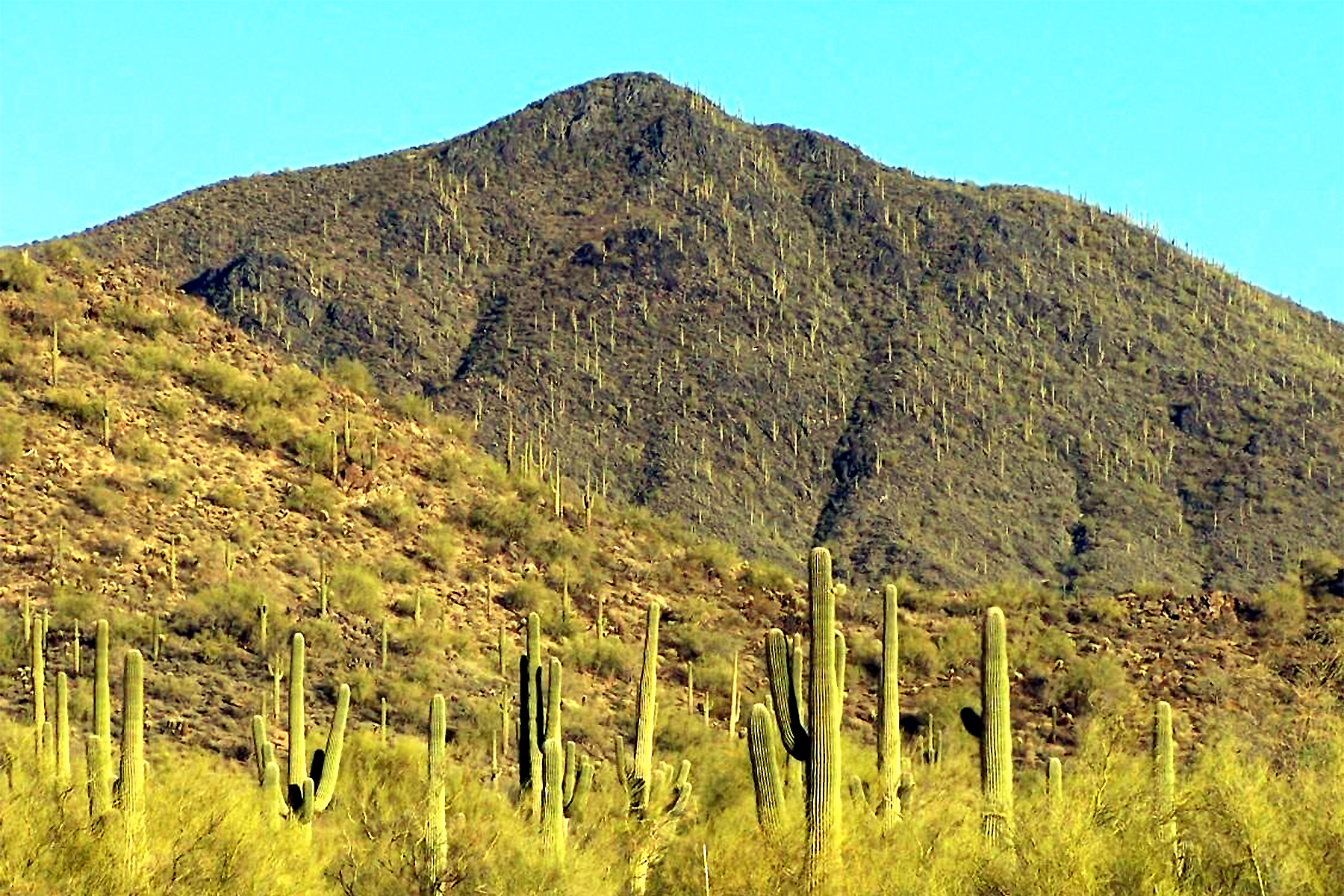 sales property at Mountain Preserve Custom Estate Lot Cave Creek, AZ