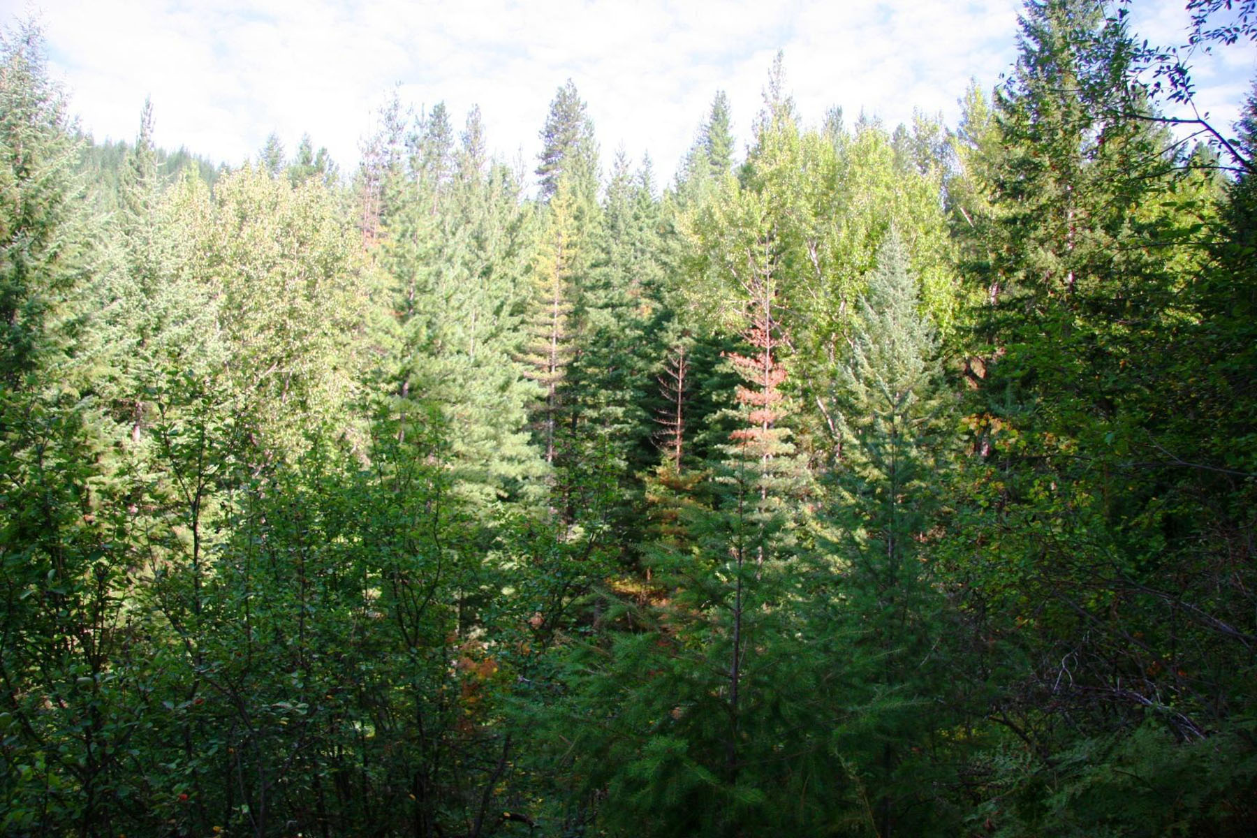 Additional photo for property listing at Heavily wooded, lush 10 acres with a year round stream NKA South Fork Ridge 4 Smelterville, Idaho 83868 United States