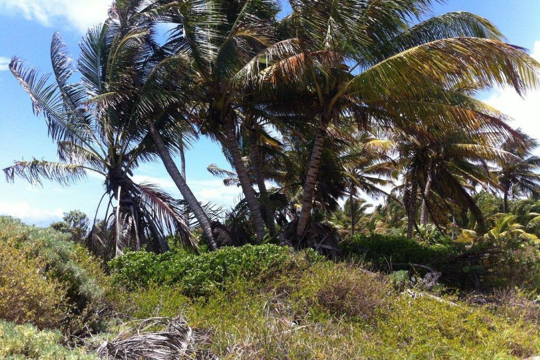 Additional photo for property listing at BEACHFRONT LOTS IN XCALAK Beachfront Lots in Xcalak Lote número OCHO y NUEVE Xcalak, Quintana Roo 77940 Mexico
