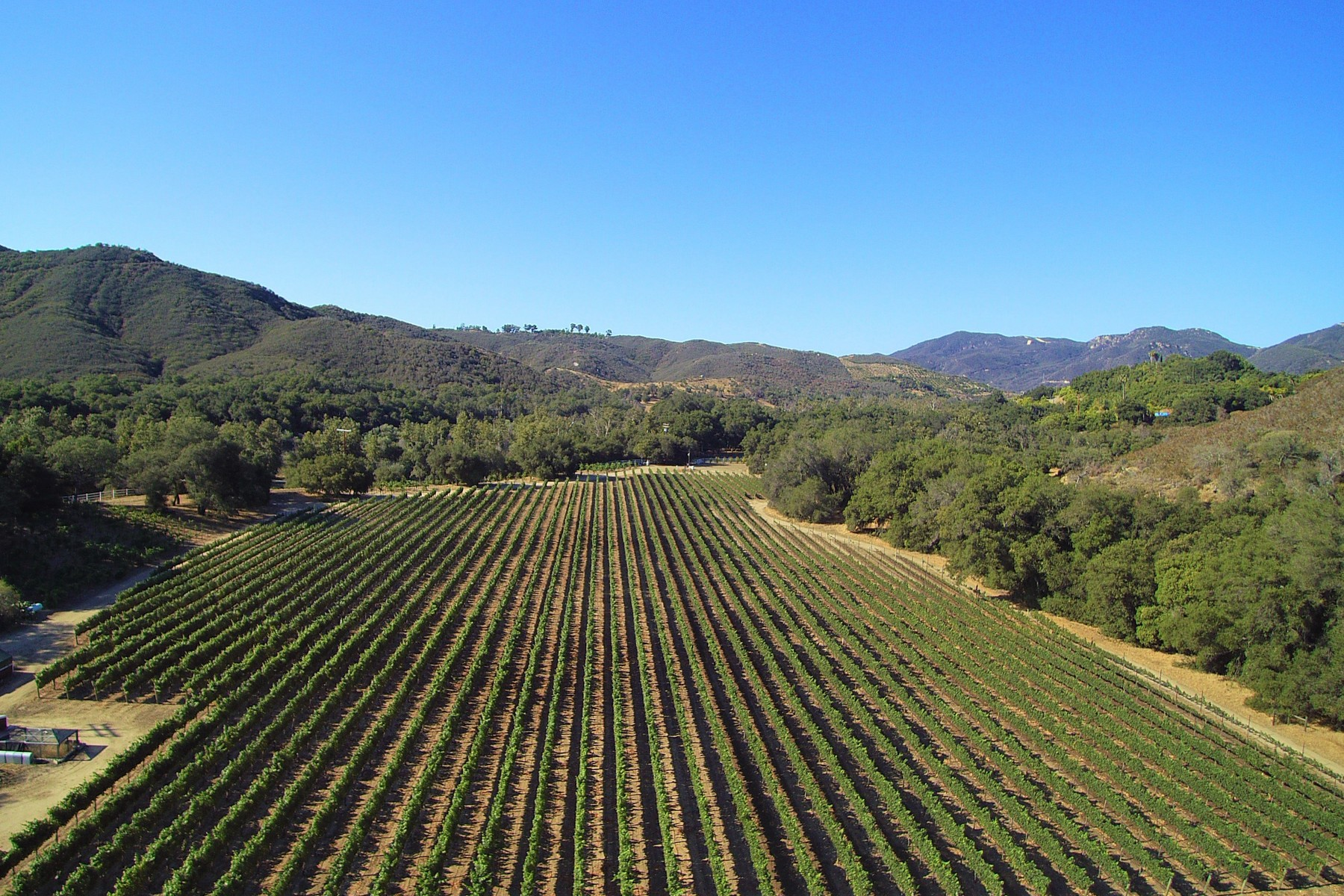 Vigneto per Vendita alle ore Peaceful Oaks Ranch Vineyard 40550 De Luz Murrieta (81 Acres) Fallbrook, California 92028 Stati Uniti