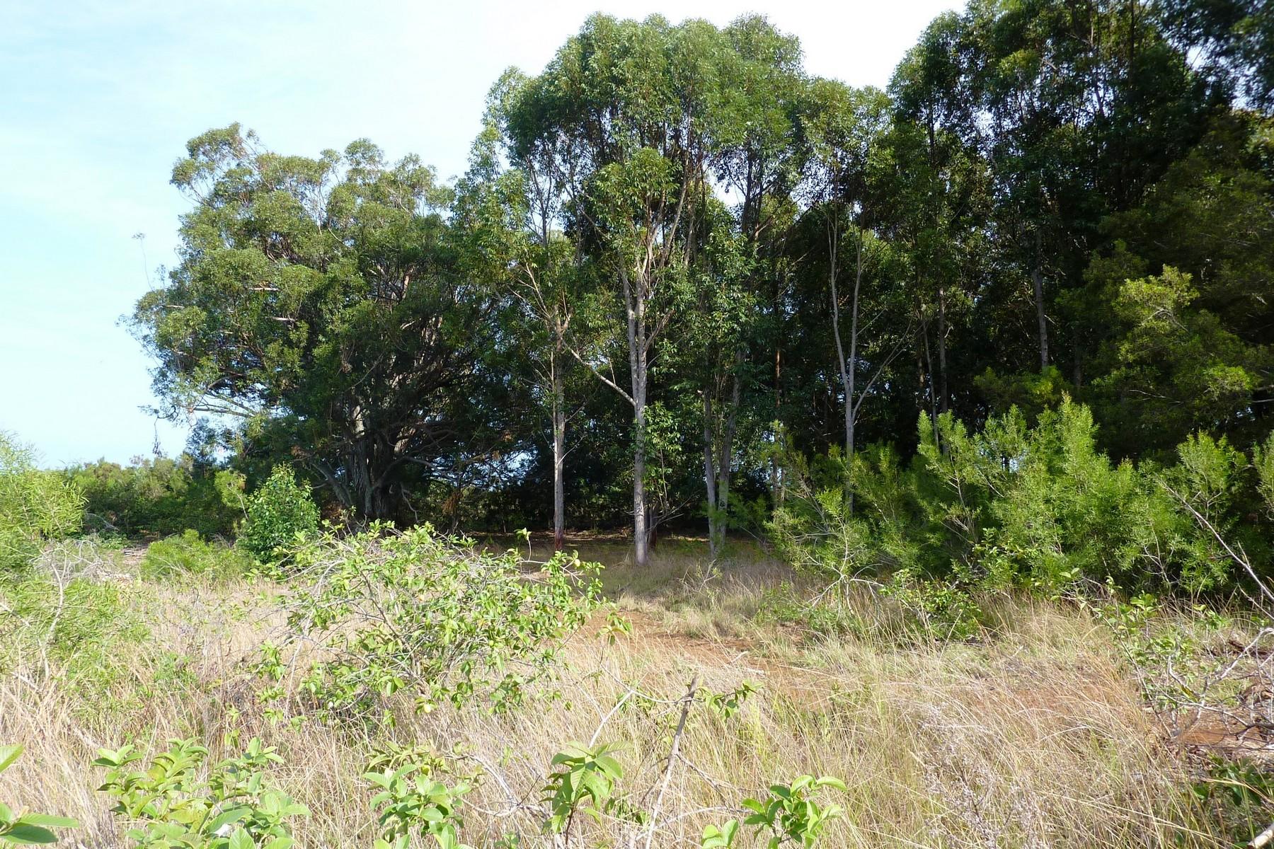 Land for Sale at Kauhikoa Road, Haikku-2 Acres, 2 Miles from Makawao Town 0 Kauhikoa Road, Haiku, Hawaii, 96708 United States