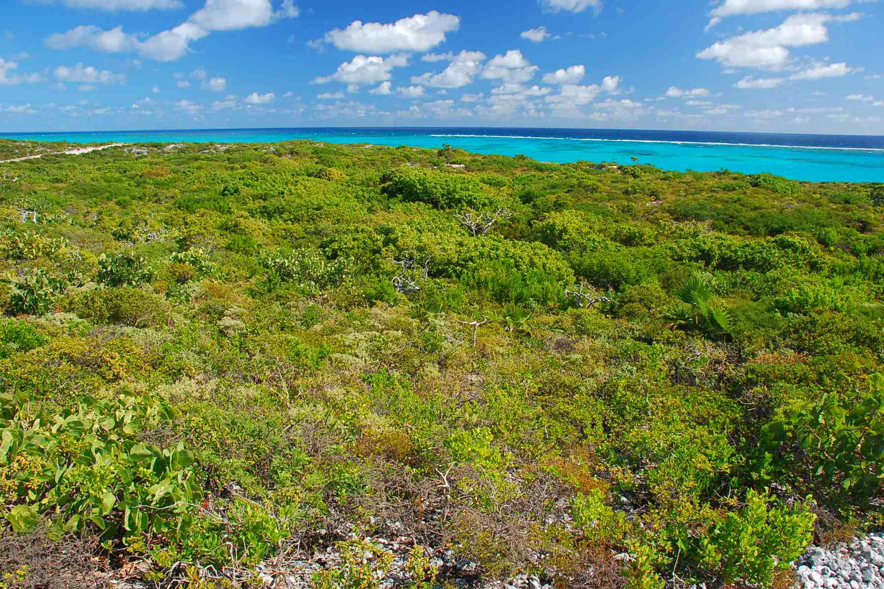 Additional photo for property listing at Oceanfront Lot 1206 Sailrock, South Caicos Îles Turques Et Caïques