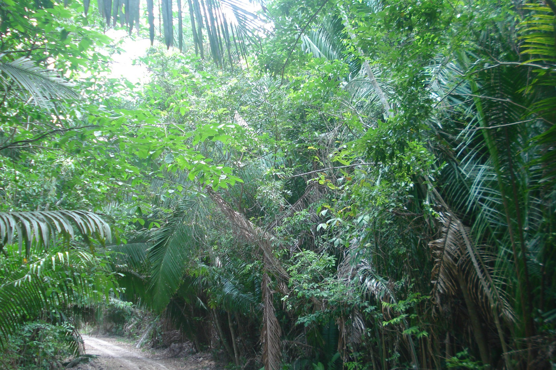 Additional photo for property listing at LOT 2 IN THE HEART OF MAYAN ZONE New Loria, Othon P. Blanco Felipe Carrillo Puerto, Other Areas In Mexico 77160 Mexico