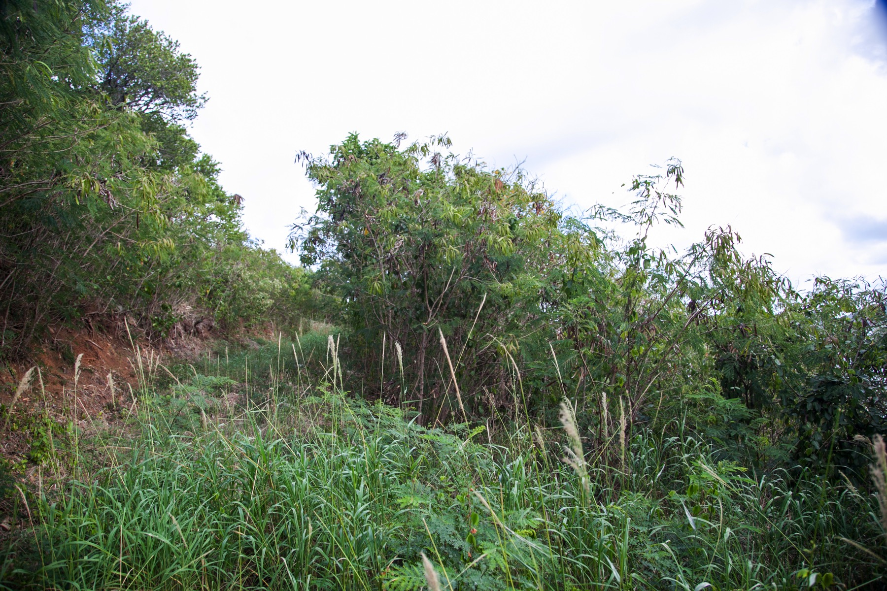 Additional photo for property listing at Rockhaven Land Cooten Bay, Tortola British Virgin Islands