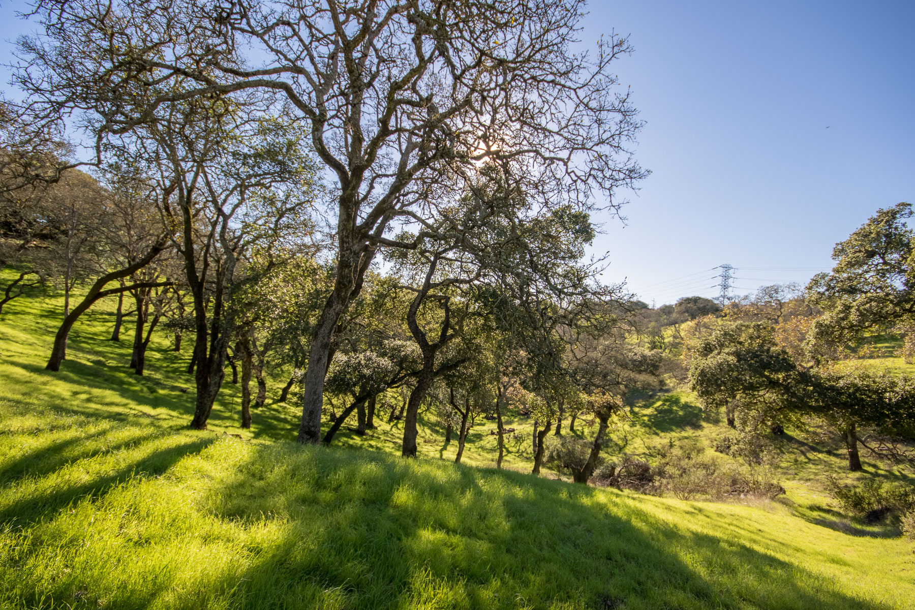 Land for Sale at Vacant Lot in Greenpoint APN 143-370-41 Novato, California 94949 United States