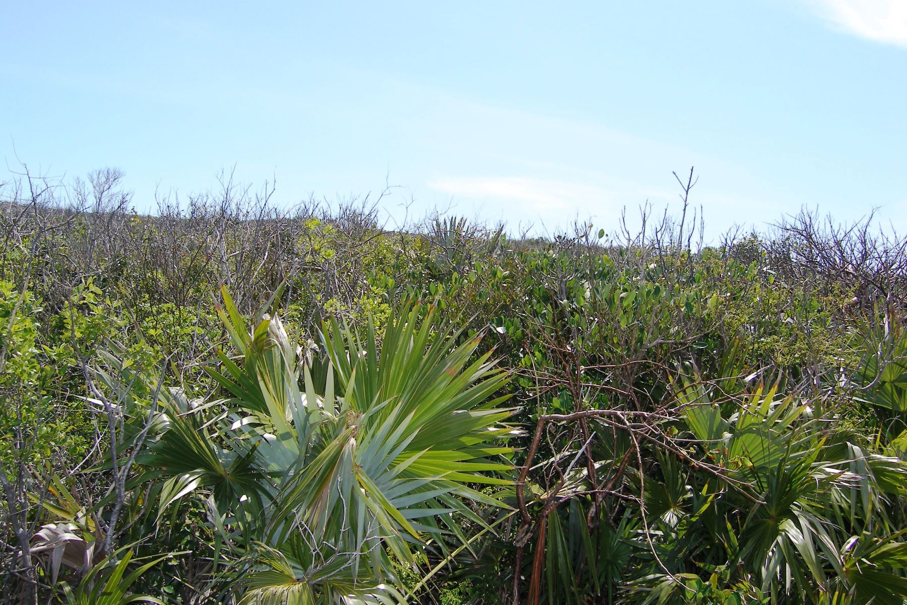 Land for Sale at Hillside Lot Eleuthera Island Shores, Gregory Town, Eleuthera Bahamas
