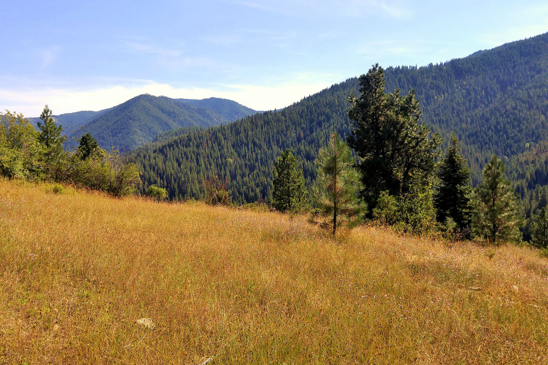 Terrain pour l Vente à 36.51 acres overlooking the beautiful Notrh Idaho mountains NNA 5 East Fork Pine Creek Rd Pinehurst, Idaho, 83850 États-Unis