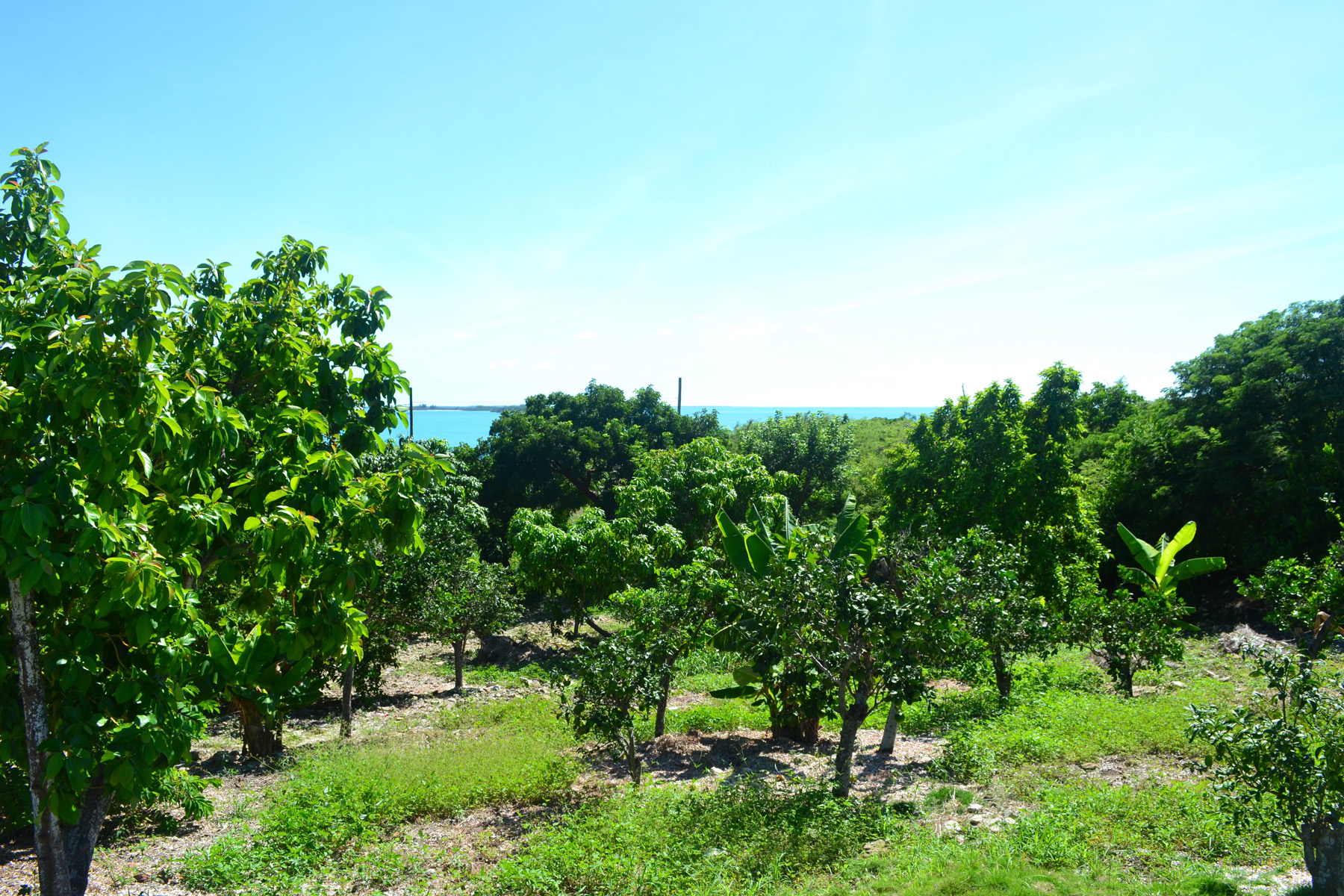 Additional photo for property listing at Russell Island Fruit Lot with water views Spanish Wells, Eleuthera Bahamas