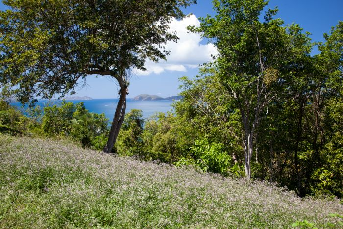 Panoramic Hill Top Land