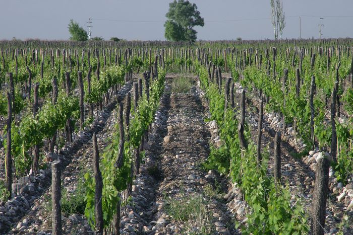 O.Fournier Wine Partners
