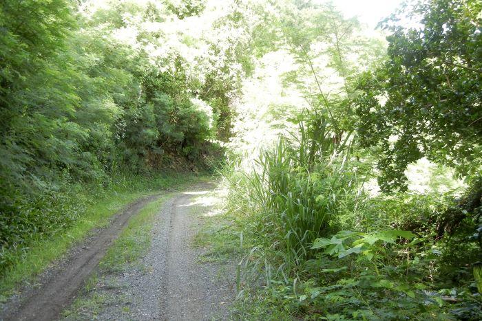 Belmont Plantation Land