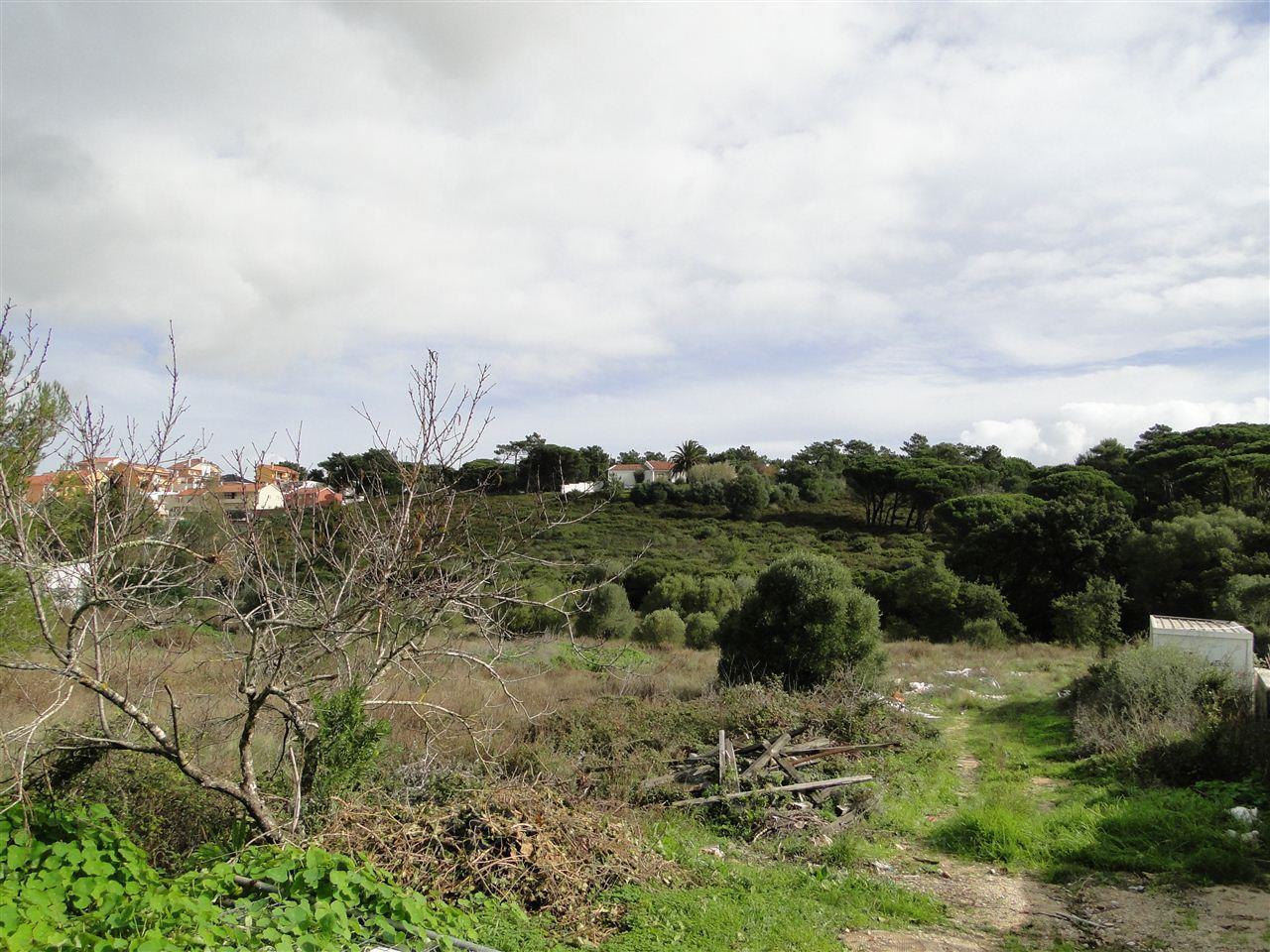 토지 용 매매 에 Stand for Sale Cascais, 리스보아 포르투갈