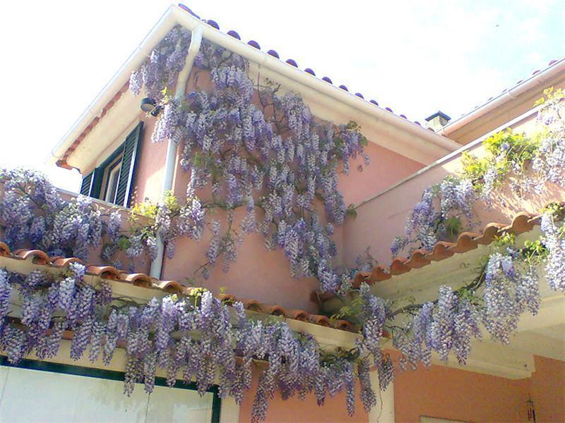 独户住宅 为 销售 在 House, 2 bedrooms, for Sale Sintra, Sintra, 葡京 葡萄牙