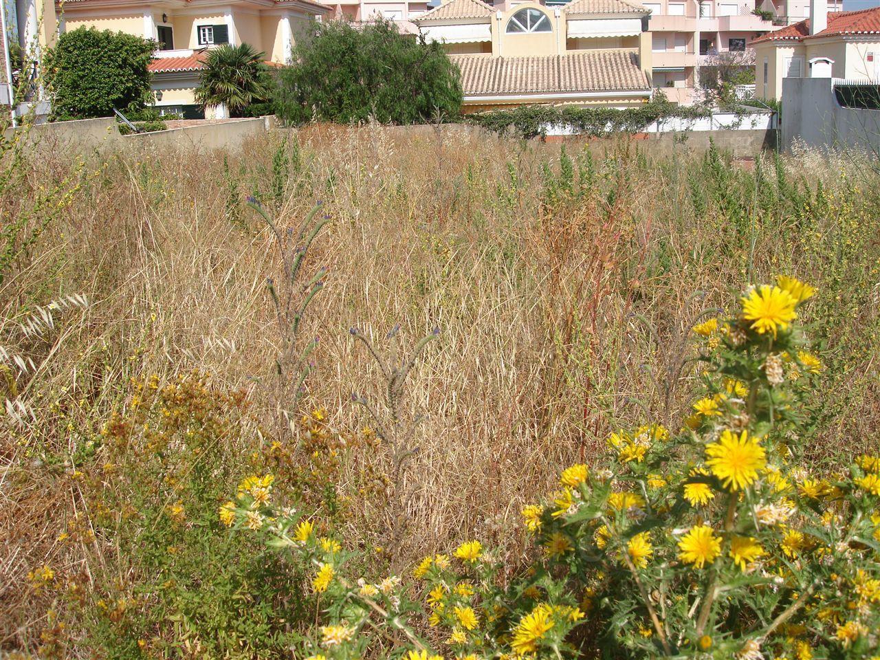 土地 为 销售 在 Stand for Sale Cascais, 葡京 葡萄牙