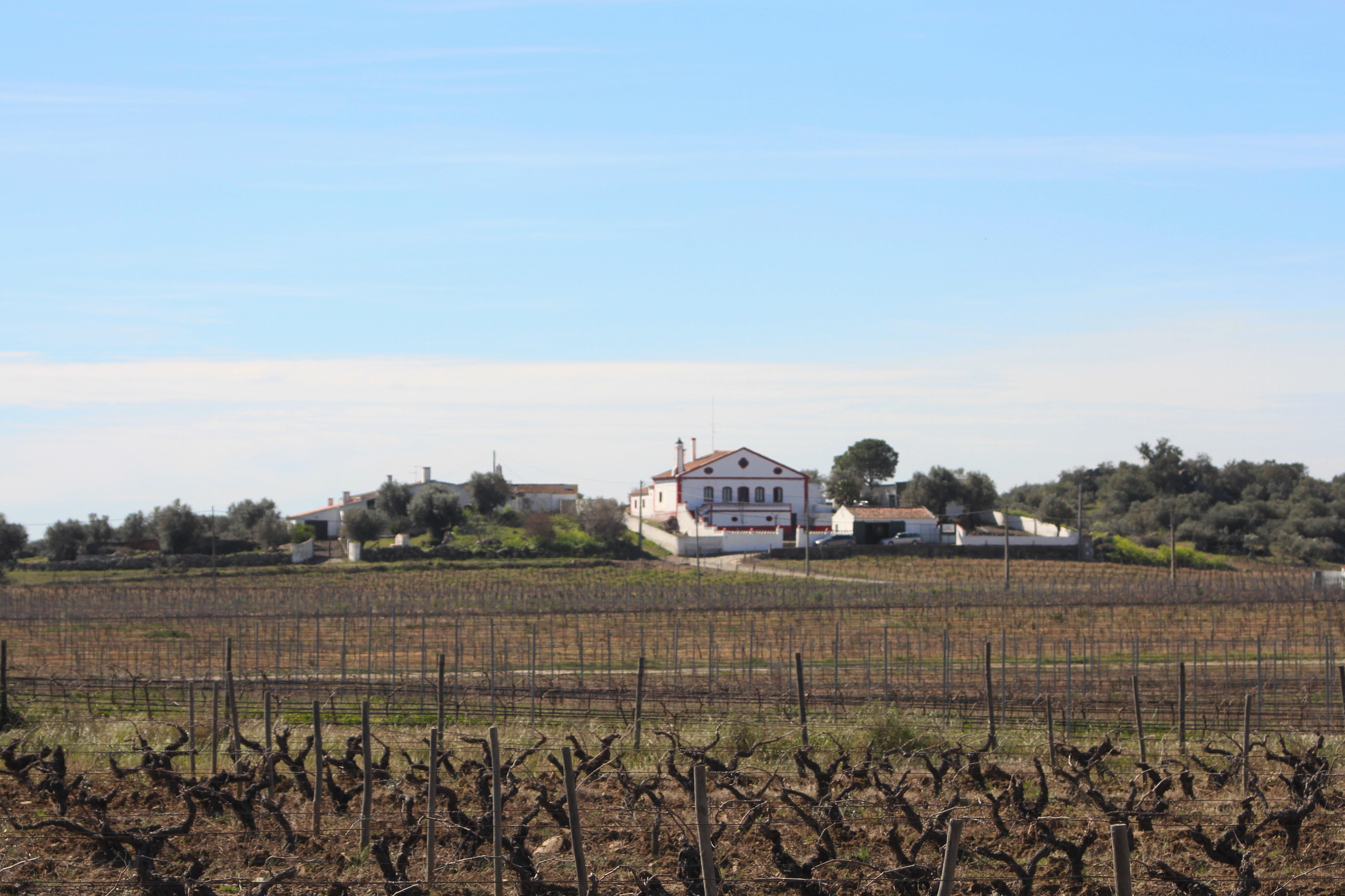 Farm / Ranch / Plantation for Sale at Country Estate, 5 bedrooms, for Sale Other Portugal, Other Areas In Portugal 7200-226 Portugal