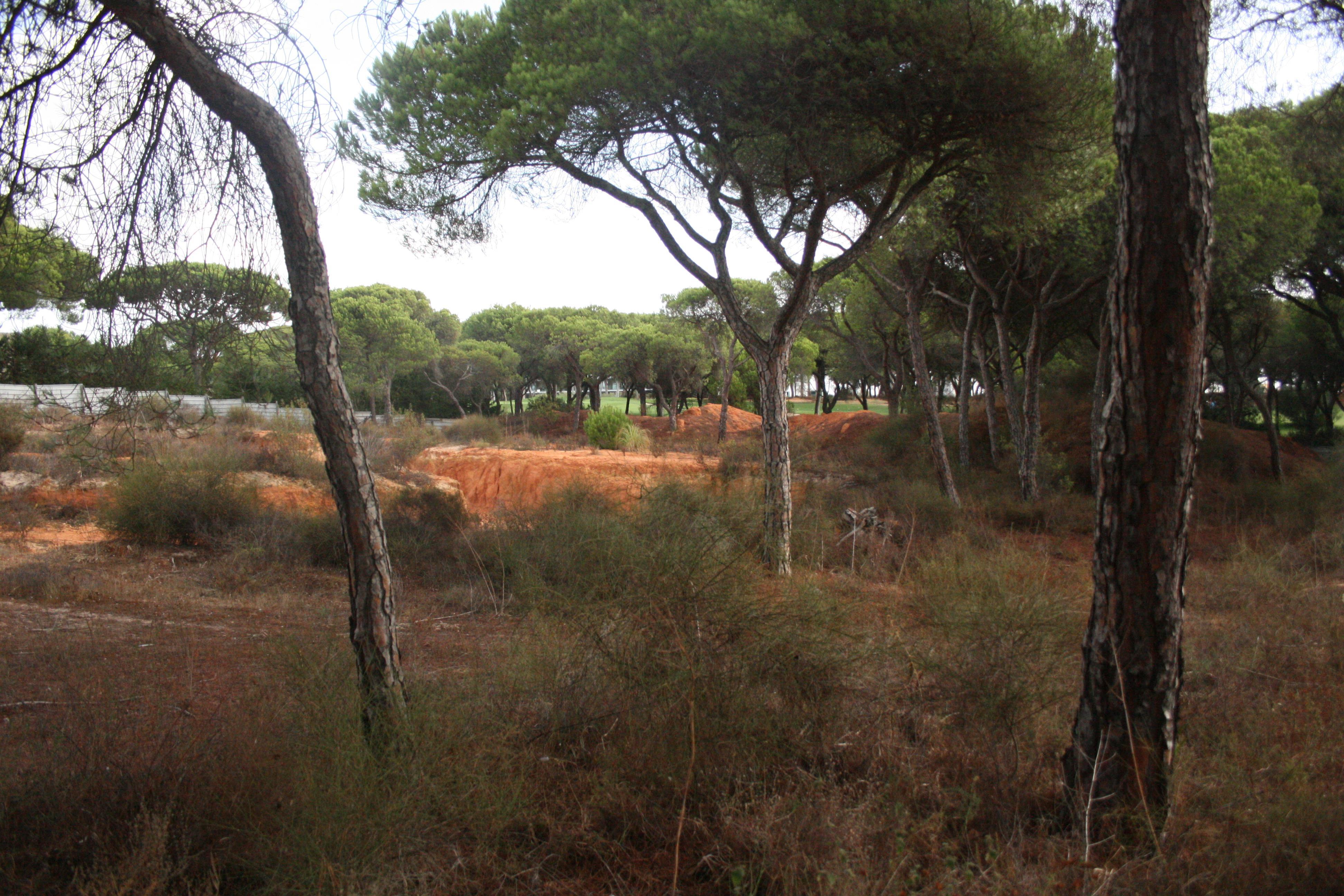 Земля для того Продажа на Real estate land for Sale Loule, Algarve, 8125-000 Португалия