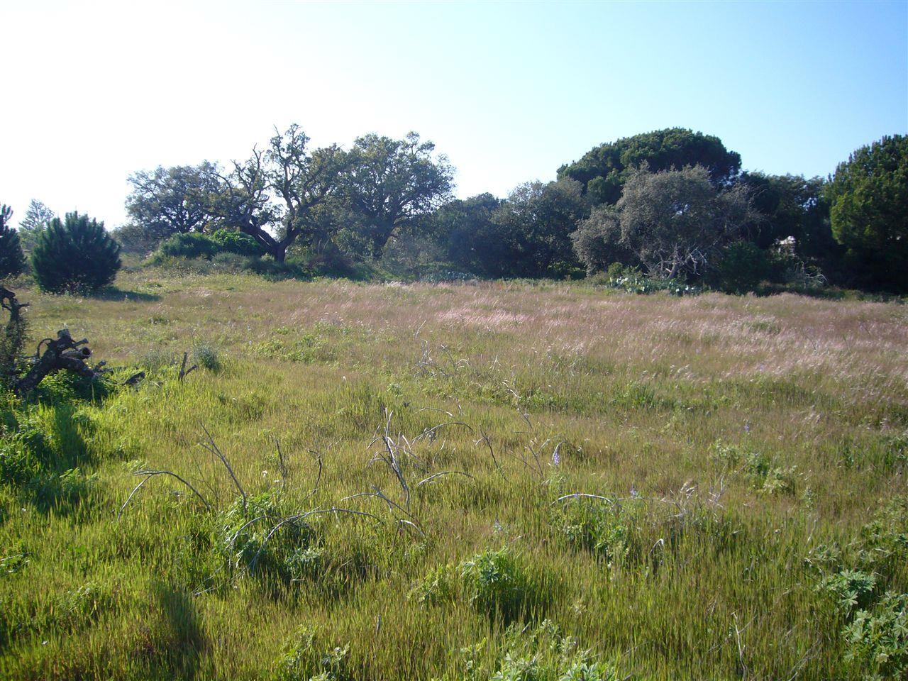 Land for Sale at Stand for Sale Loule, Algarve Portugal