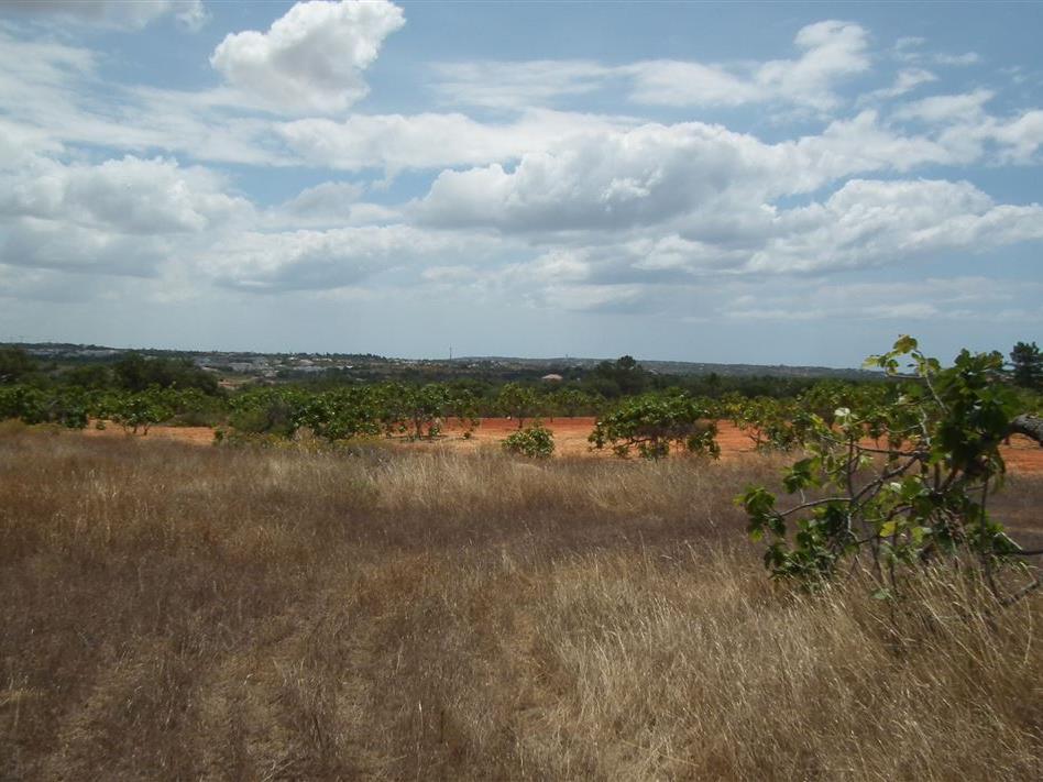 Terrain pour l Vente à Real estate land for Sale Silves, Algarve Portugal