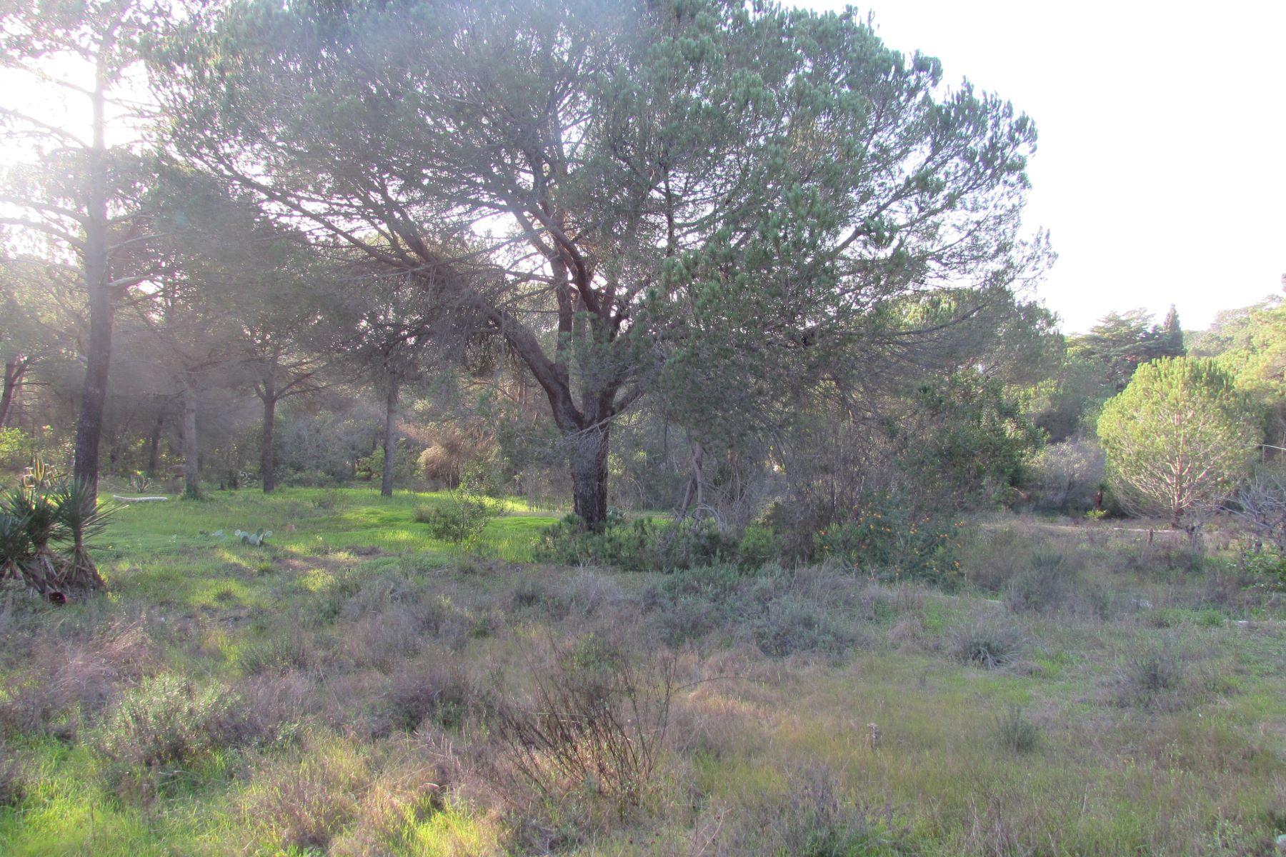Terrain pour l à vendre à Stand for Sale Loule, Algarve, Portugal