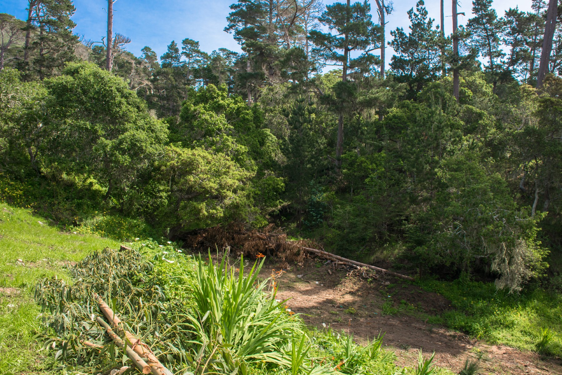 Additional photo for property listing at Two Vacant Lots in Carmel Highlands 184 San Remo Road Carmel Highlands, California 93923 United States