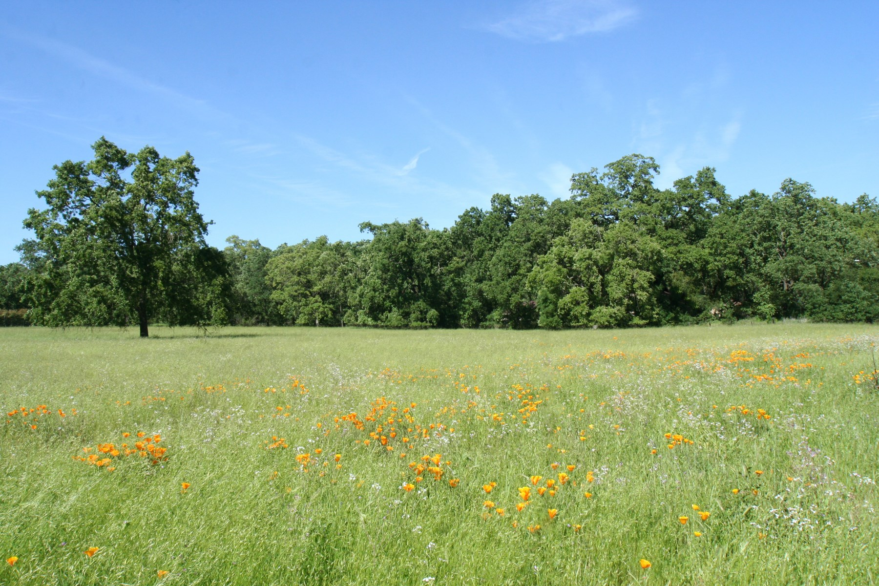 Land for Sale at Sonoma Valley Acreage 0 Arnold Drive Sonoma, California 95476 United States