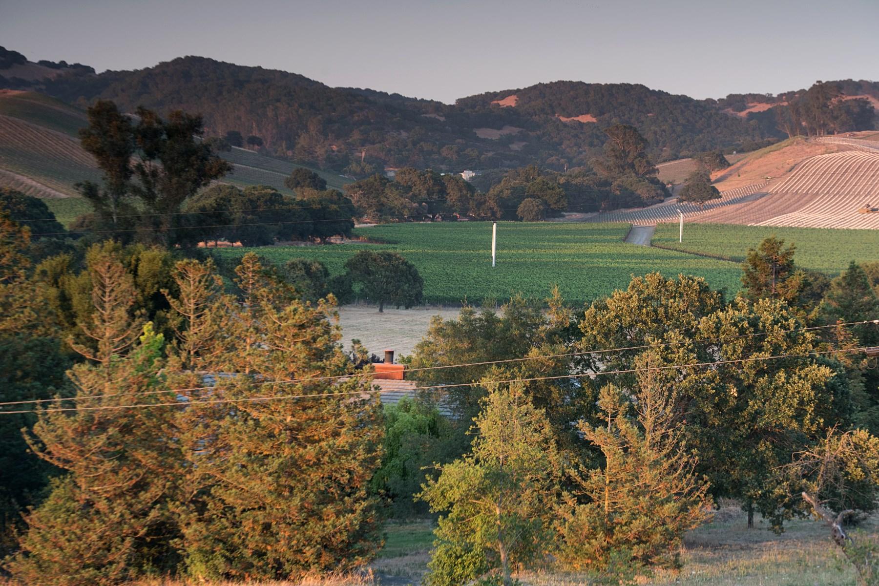 Terrain pour l Vente à 21700 Burndale Road 21700 Burndale Rd Sonoma, Californie, 95476 États-Unis