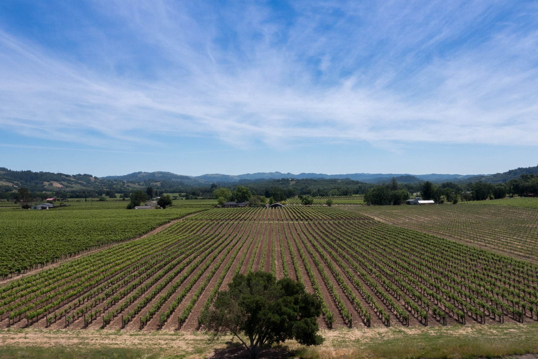 Land for Sale at Rare Healdsburg Development Opportunity 4797 E Soda Rock Ln Healdsburg, California, 95448 United States