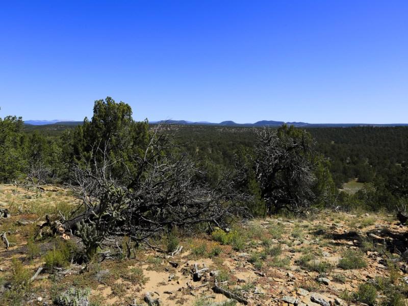 Terrain pour l Vente à 503 Ojo De La Vaca Santa Fe, New Mexico 87508 États-Unis