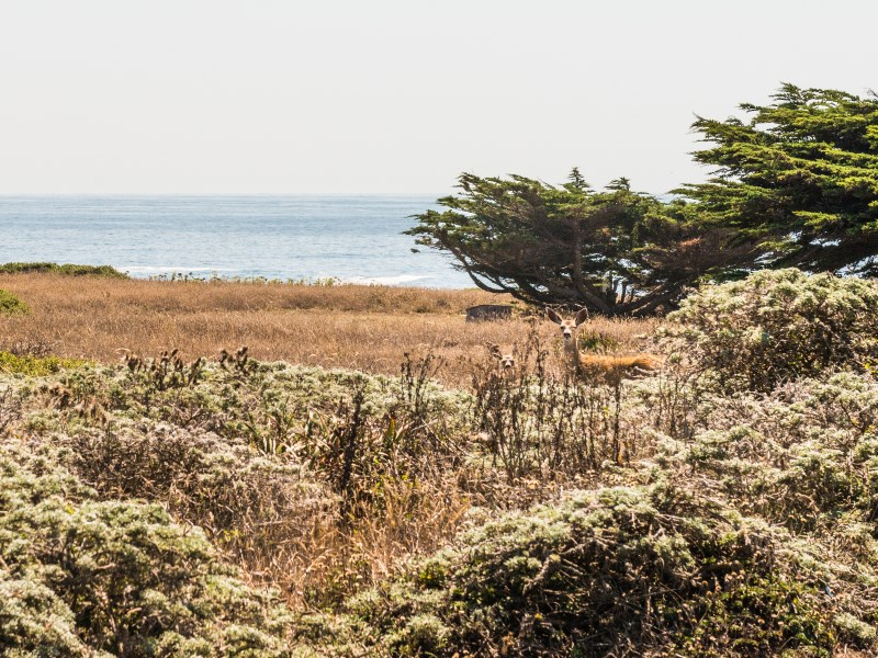 Land for Sale at Enchanting White Water Views 291 Buckeye The Sea Ranch, California 95497 United States