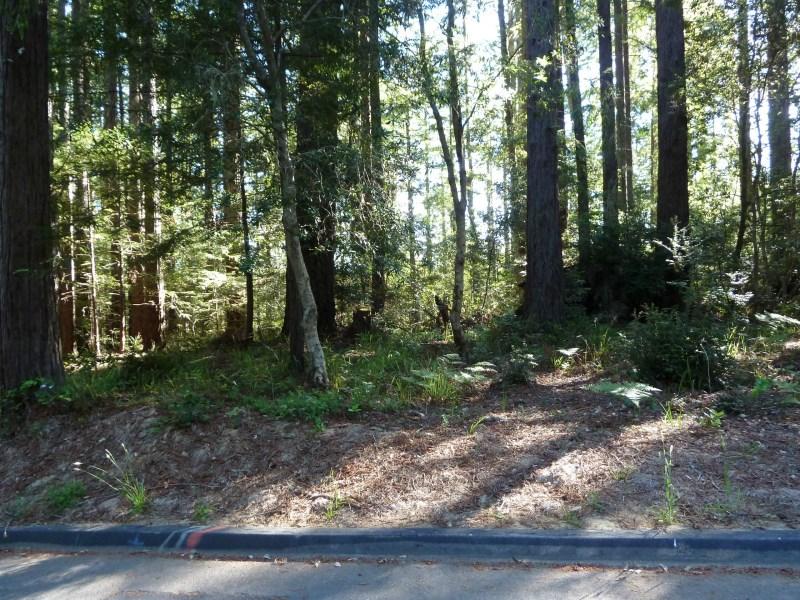土地 为 销售 在 Enchanting Sea Ranch Lot 35279 Timber Ridge Road The Sea Ranch, 加利福尼亚州, 95476 美国