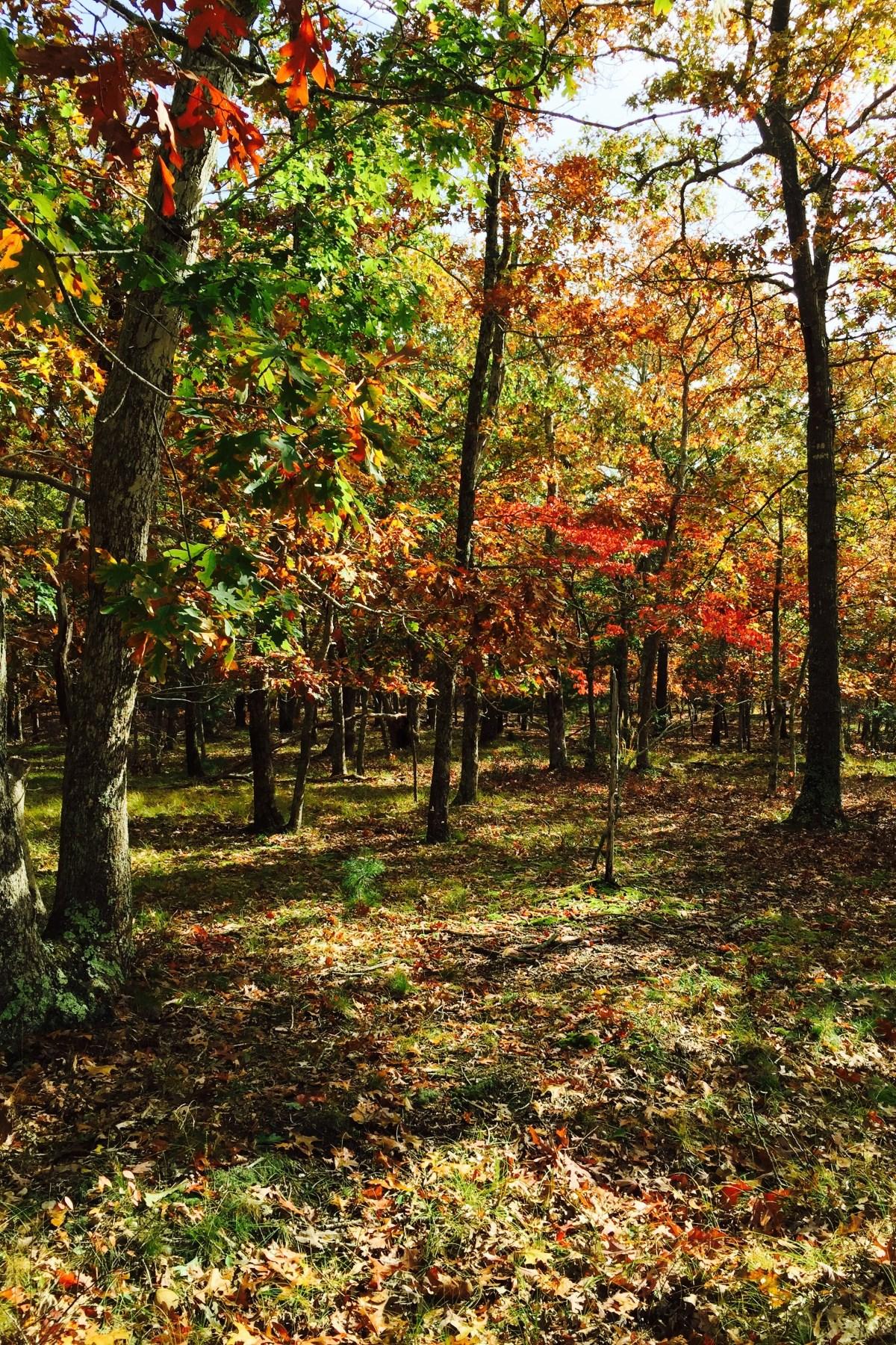 土地 为 销售 在 One Acre Parcel 东汉普顿, 纽约州 11937 美国