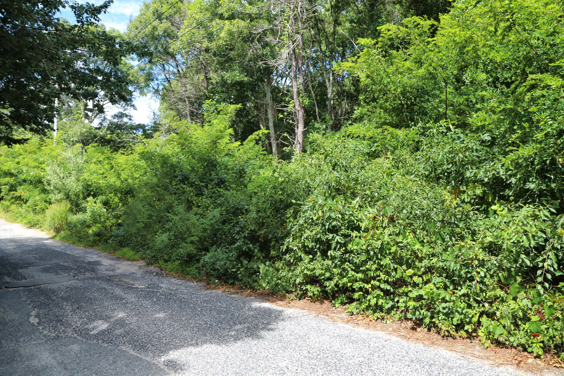 Land for Sale at Woods Hole Elevated Lot 41 Mccallum Drive Falmouth, Massachusetts, 02540 United States