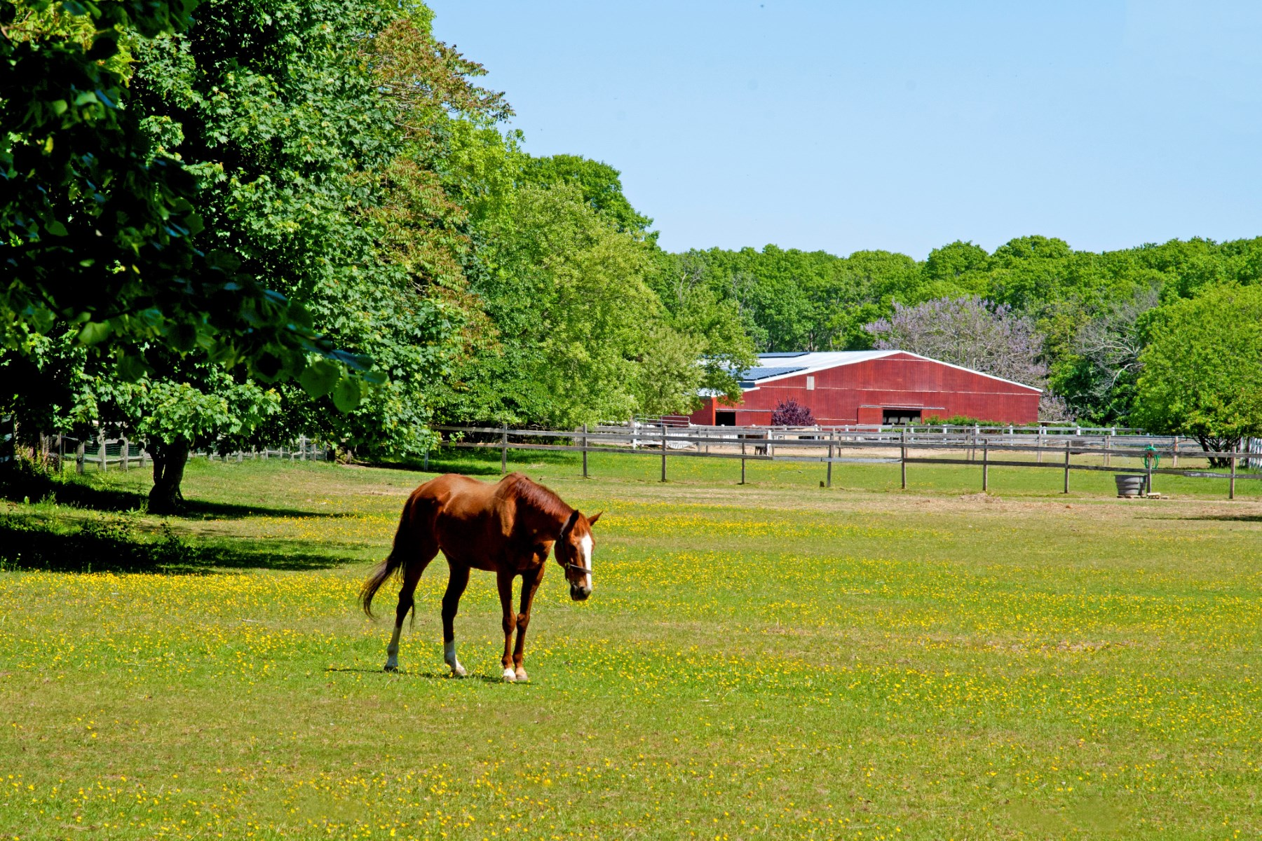 Farm / Ranch / Plantation for Sale at 80 Dollar Champion 15+/- Acre Horse Farm East Hampton, New York 11937 United States